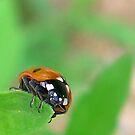 Good luck - Ladybug Close up by NicoleBPhotos