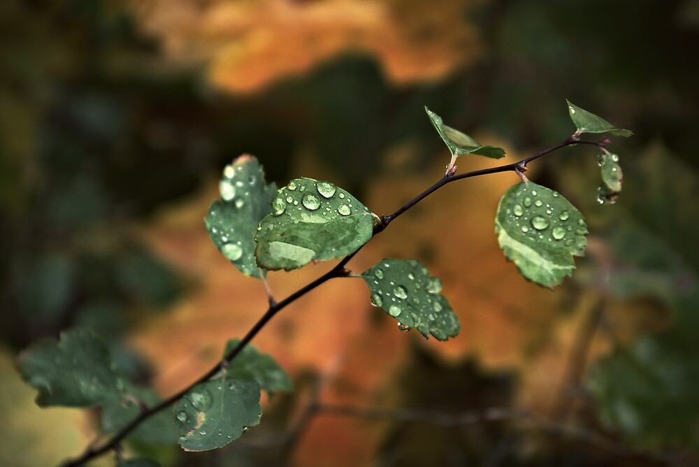 Drops & Leaves by John Roshka