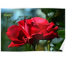 Red Rose ...... Poster
