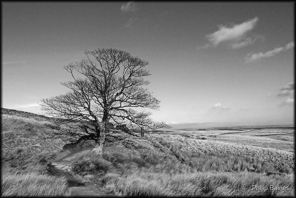 Bleak Moorland by Philip Baines