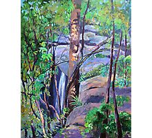 Waterfall St.Bernards on the Mountain Photographic Print