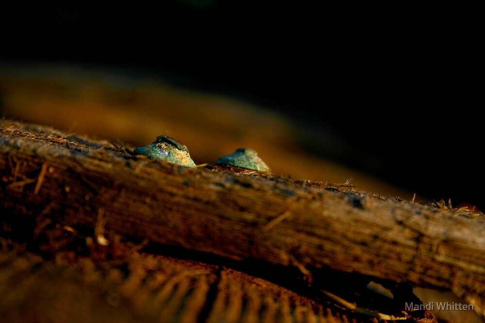 Wooden boat restoration - Goolwa South Australia by Mandi Whitten