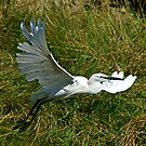 Egret by SWEEPER
