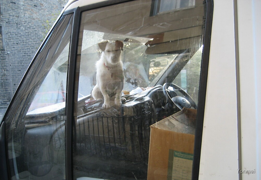 Dog dreams in car by Yonmei