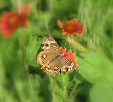 Buckeye Butterfly on a Blanket by Roma Holley