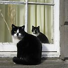 Cats reflecting by Yonmei