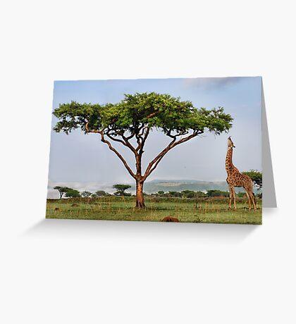 African lollipop Greeting Card