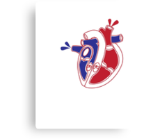 An illustration of a working heart Canvas Print