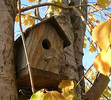 Birdhouse in Autumn by jillspring