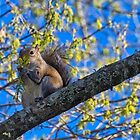 Squirrel Eating the Flowers of the Tree by TJ Baccari Photography