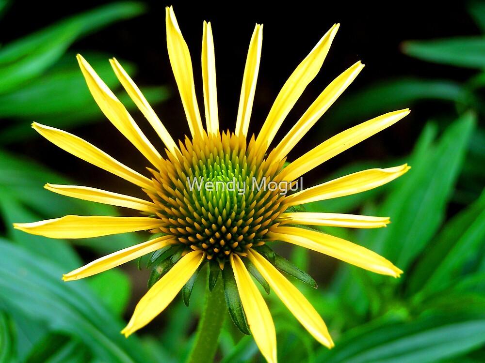 Yellow Sunshine by Wendy Mogul