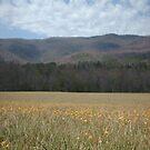 Flowery Mountain by merkinmerchant