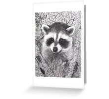 Racoon kit - graphite Greeting Card