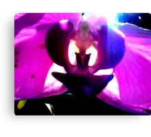 purple flower abstract Canvas Print