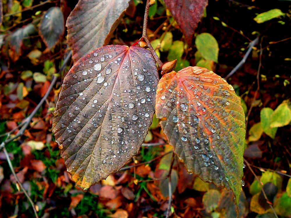 Autumn Leaves by Puffling