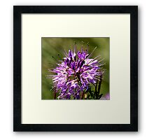 Purple is her Colour Framed Print