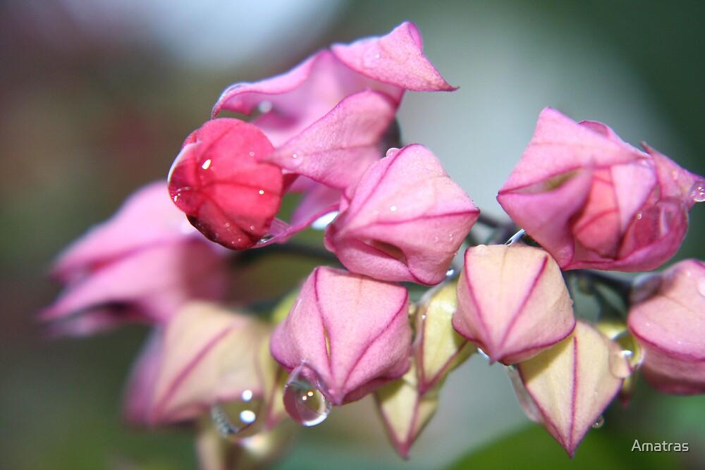 Flower Tears by Amatras