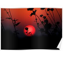 Sunset in a bed of Sunflowers Poster