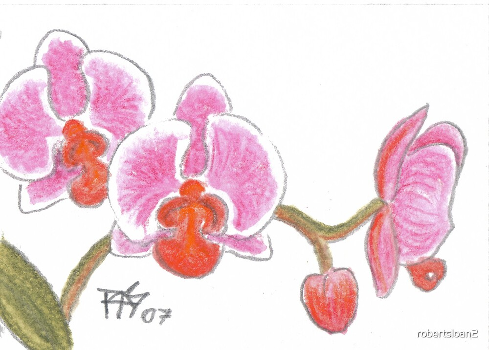 ACEO Orchid by robertsloan2