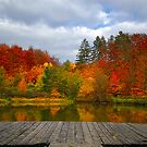 All the colors by Philippe Sainte-Laudy