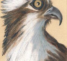 ACEO Osprey by robertsloan2