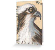 ACEO Osprey Greeting Card