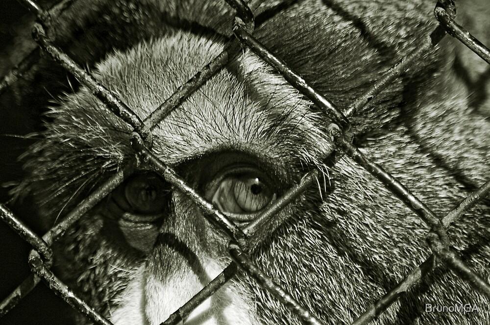 Captivity part I by BrunoMGA