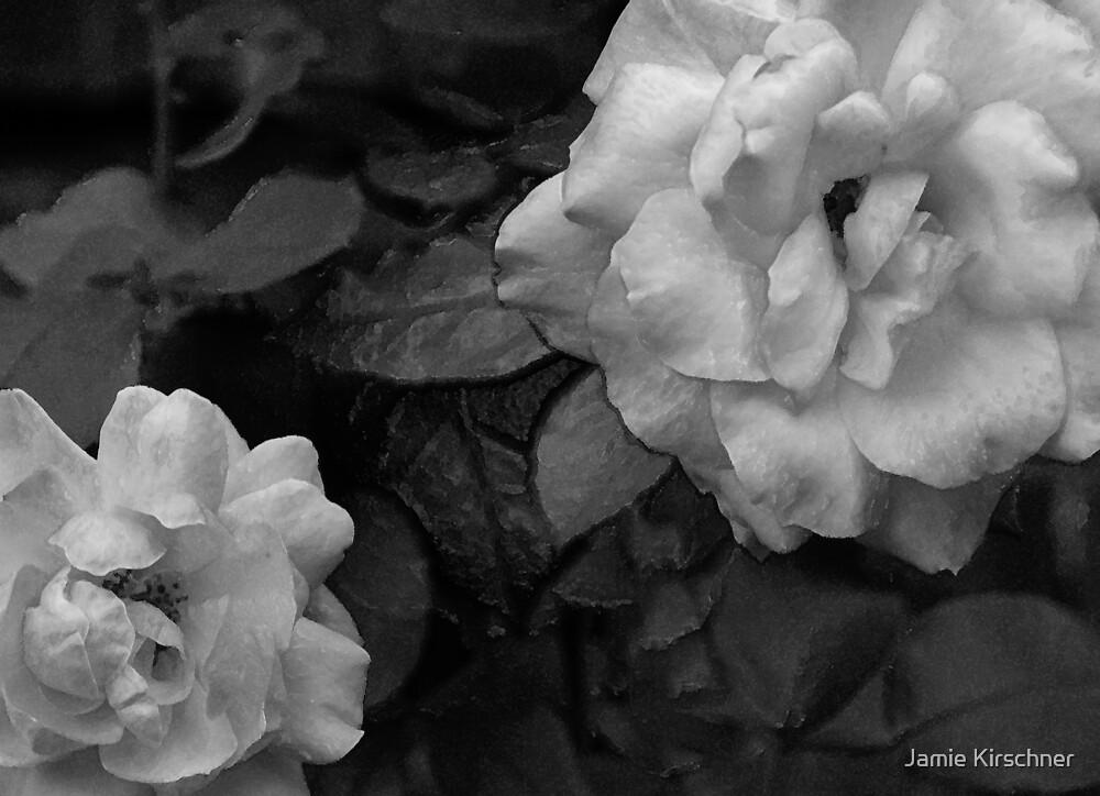 Roses by Jamie Kirschner