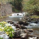 maple stream by merkinmerchant