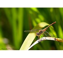 Happy Dragonfly 01 Photographic Print