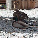 quack by merkinmerchant