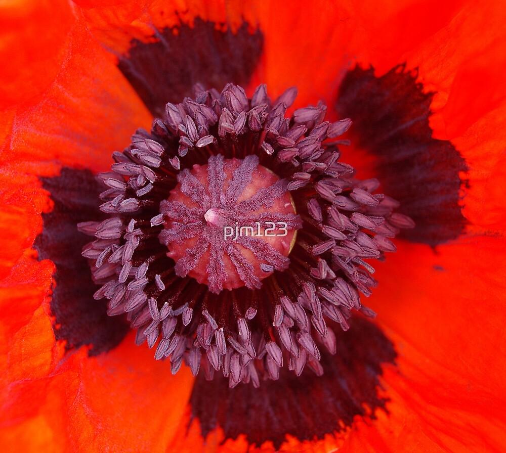 Poppy Heart by pjm123