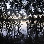 Mangrove Reflections by justineb