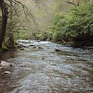 A river by merkinmerchant