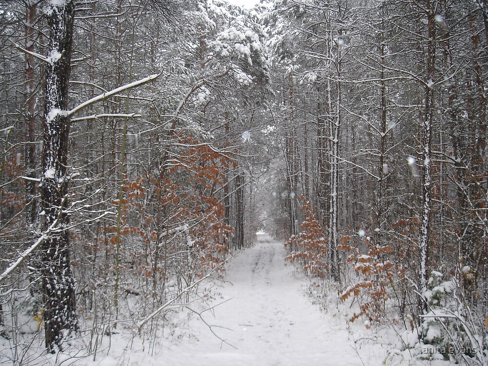 WINTER TRAIL by anita evans
