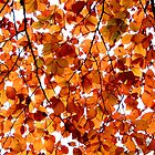 Looking up at Autumn Leaves by Puffling