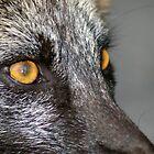 Fox Eyes by Amber Graham (grahamedia)