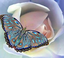 Butterflies Are Free by Randy Gentry