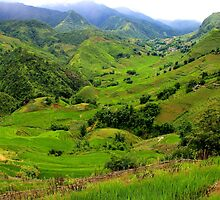 The Green Valley - Sa Pa, Vietnam. by Tiffany Lenoir