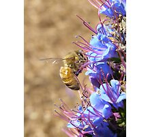 What big eyes you have! Bee, Blue Flower. 'Arilka' Mt. Pleasant.  Photographic Print