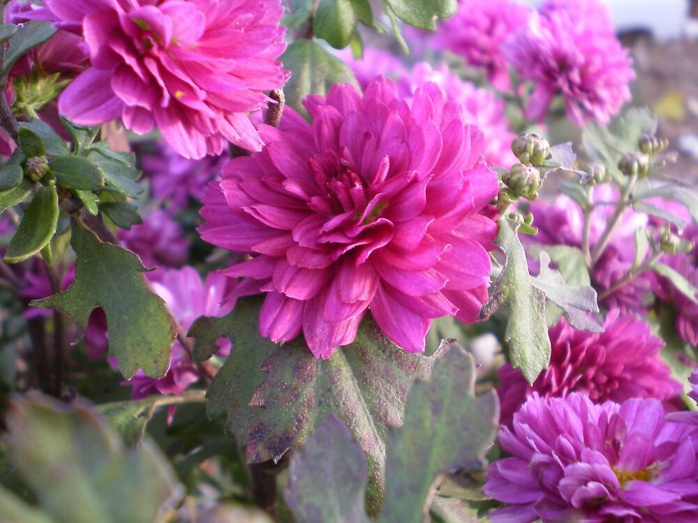 flowers by stephenmakesart