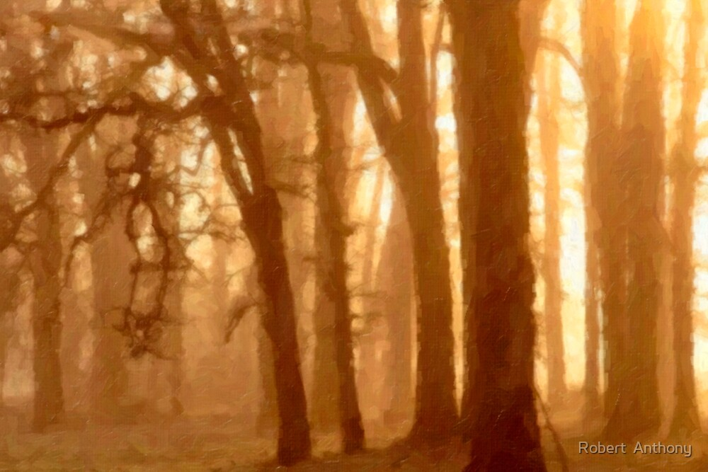 Dawn Dreamy Forest by Robert  Anthony