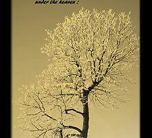 Ecclesiastes by Madeline M  Allen