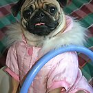 Pug In A Buggy! by minnielee