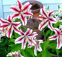 Stargazer Lily's by ERick