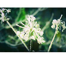 Ice Crystals Photographic Print