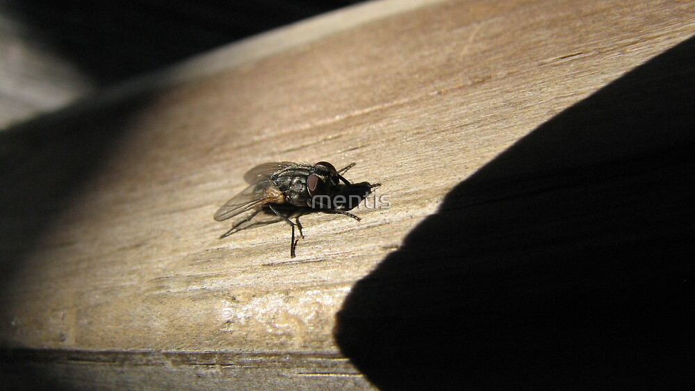 """Another from the, Mr. Fly """"The Poser"""" series by mentis"""