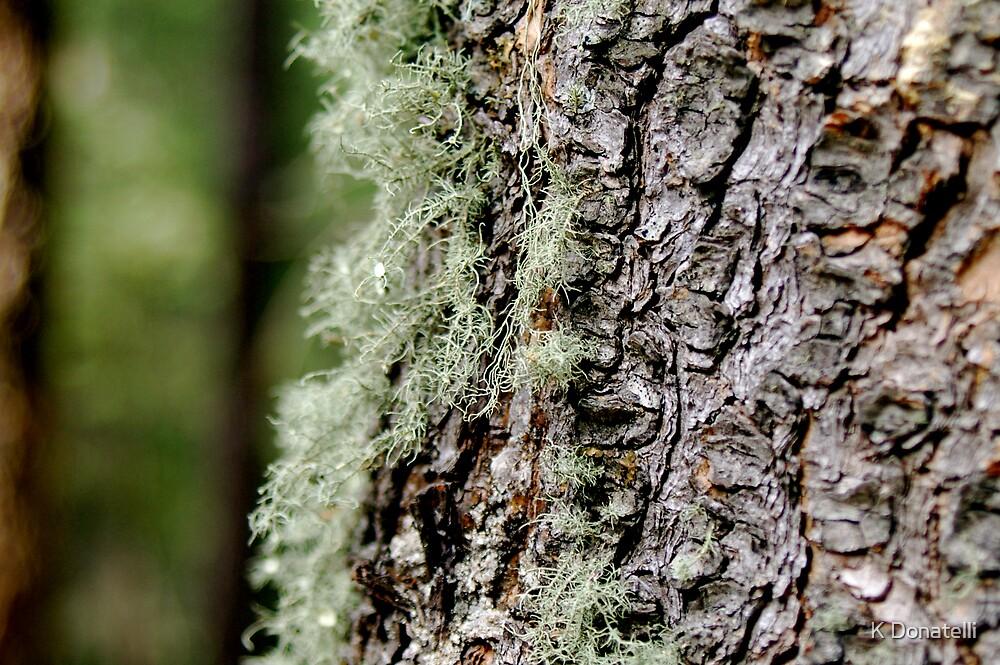 Moss 2 by K Donatelli