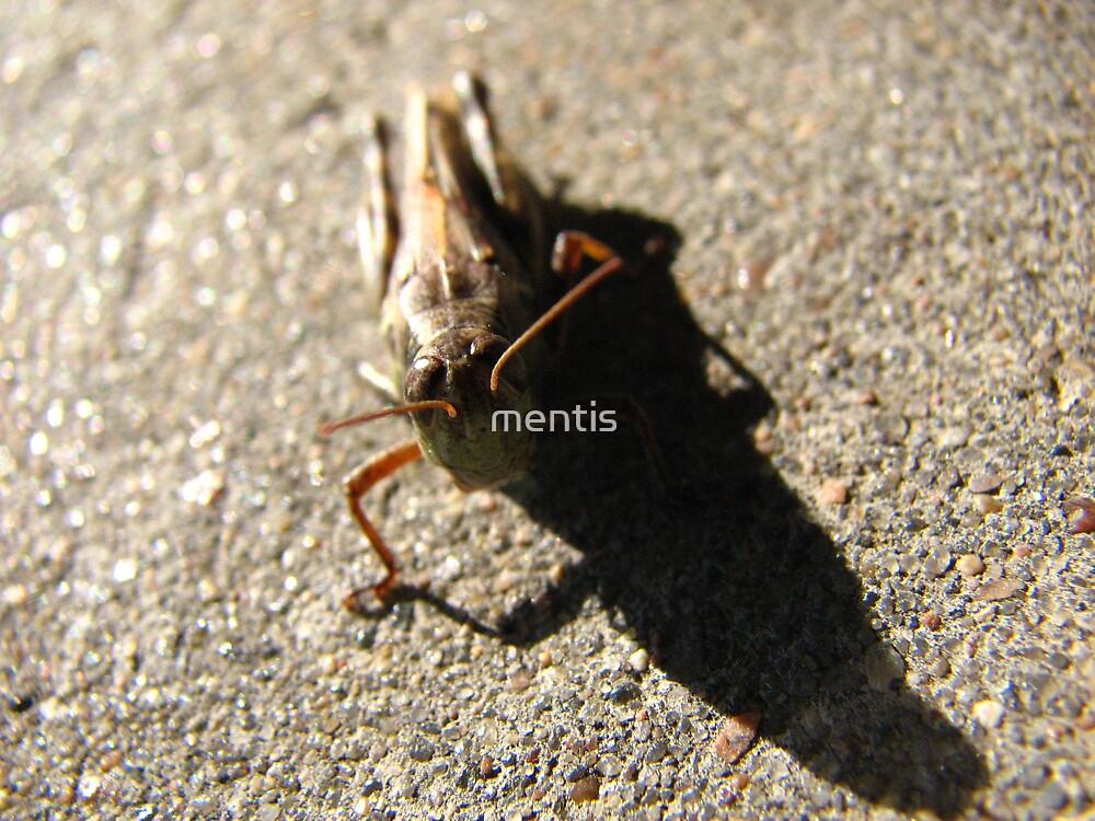 Mr. Grasshopper by mentis