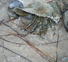 HERMIT CRAB by Cyndi Jamerson